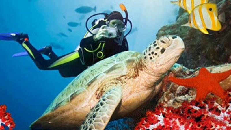 большим количеством кораллов