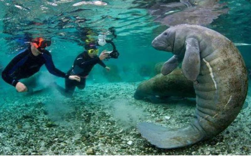 полюбуетесь на красоты подводного мира